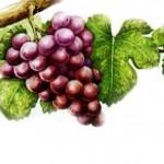 Виноград гевюрцтраминер