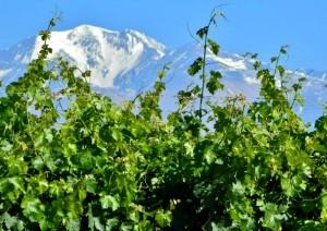Виноградники Аргентины в Мендосе