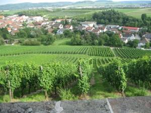Виноградники Бадена