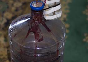 Вино из черной смородины под гидрозатвором