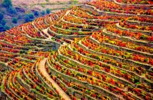 виноградники Дору
