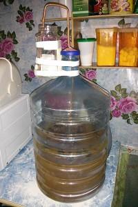 Вино из одуванчиков под гидрозатвором